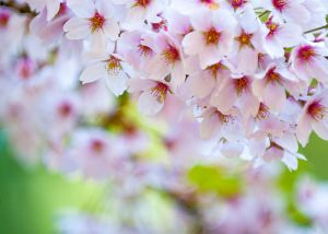 800px-Colours_of_Spring_(3486325902)